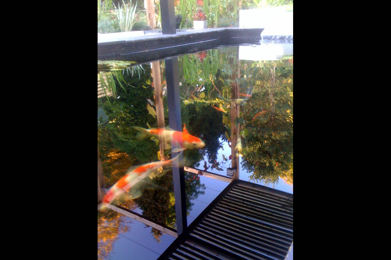 Koi fish ponds outerspace for Outer space gardens